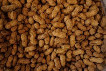 kacang-kulit