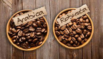 mau-bisnis-kopi-wajib-tahu-dulu-beda-antara-kopi-robusta-arabica