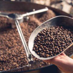 menelisik-kopi-toraja-sulawesi-kopi-eksotis-nusantara