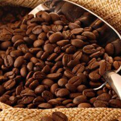 mengenal-kopi-aceh-gayo-dan-alasan-jadi-kopi-termahal-di-dunia