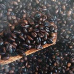 kopi-liberika-sambas-kopi-khas-kalimantan-barat-beraroma-nangka