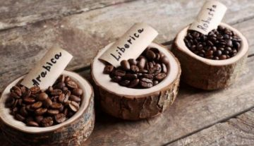 perbedaan-karakteristik-kopi-arabica-robusta-dan-liberika